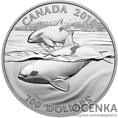 Серебряная монета 100 Долларов Канады